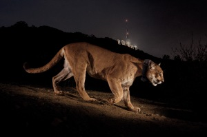 puma_hollywood_39