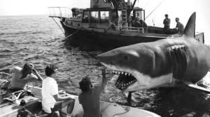 Tiburón_39